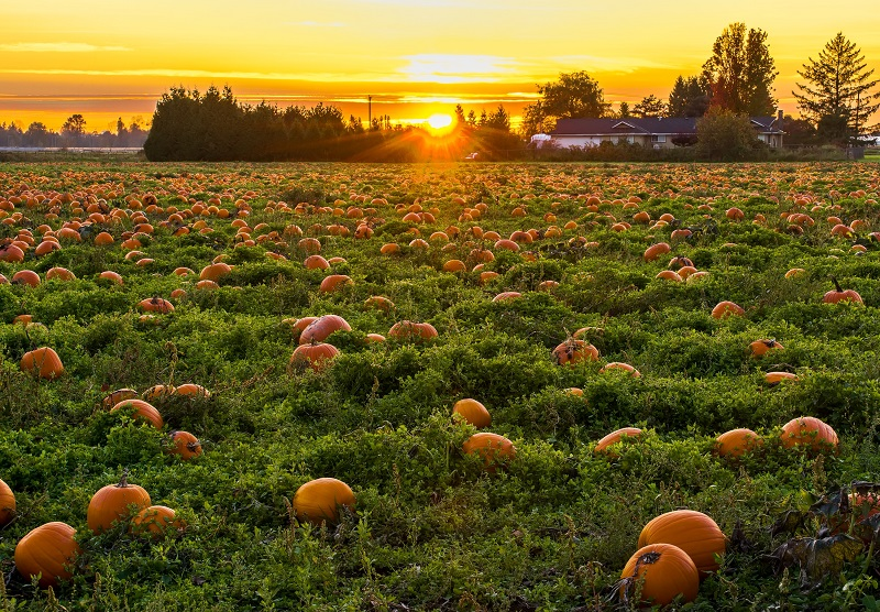 10 Pumpkin Patches in Orange County