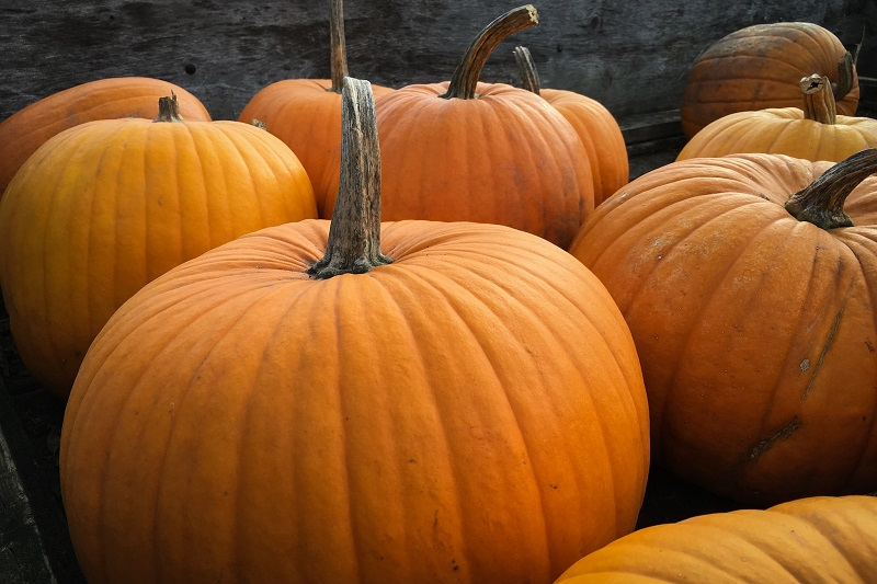 There are many different pumpkin patches in Orange County that offer different activities for you and the entire family to enjoy.