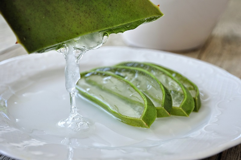 Herbalife Digestive Health Benefits Aloe Plant Cut into Slices with Aloe Gel Pouring Out