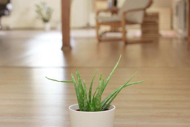 Herbal Aloe Bath & Body Care Products